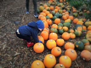 scalpwood-nurseries-pumpkin-patch Wishfulstylequeen